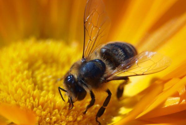 Podsticaji za pčelarstvo