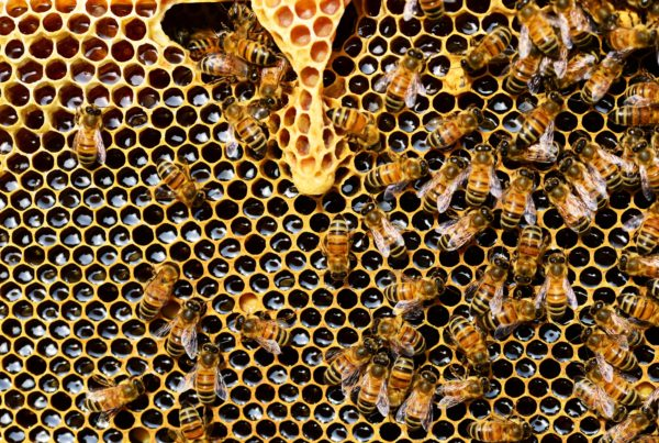 Podsticaji pčelarstvo APV