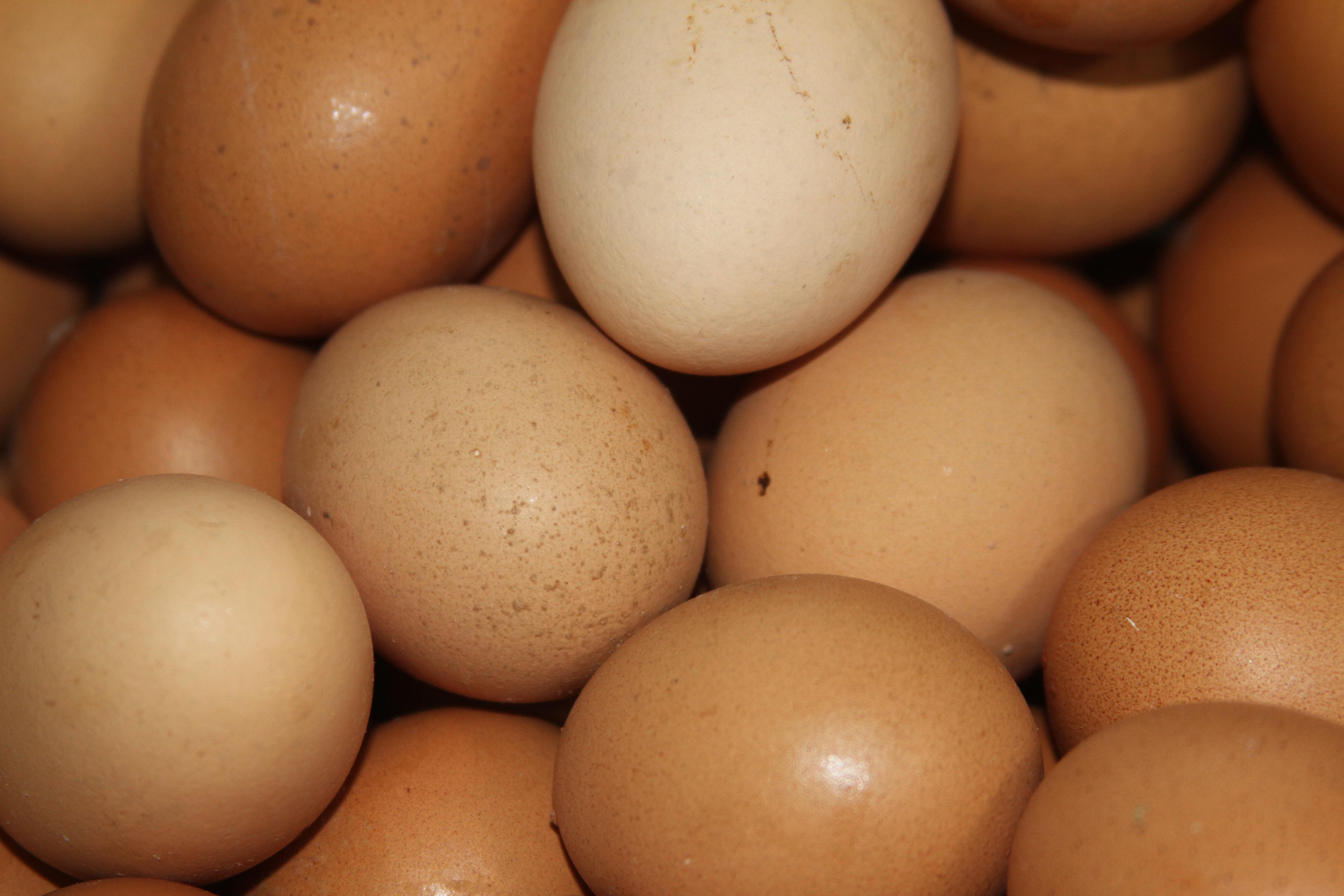 Podsticaj za novu opremz za proizvodnju konzumnih jaja