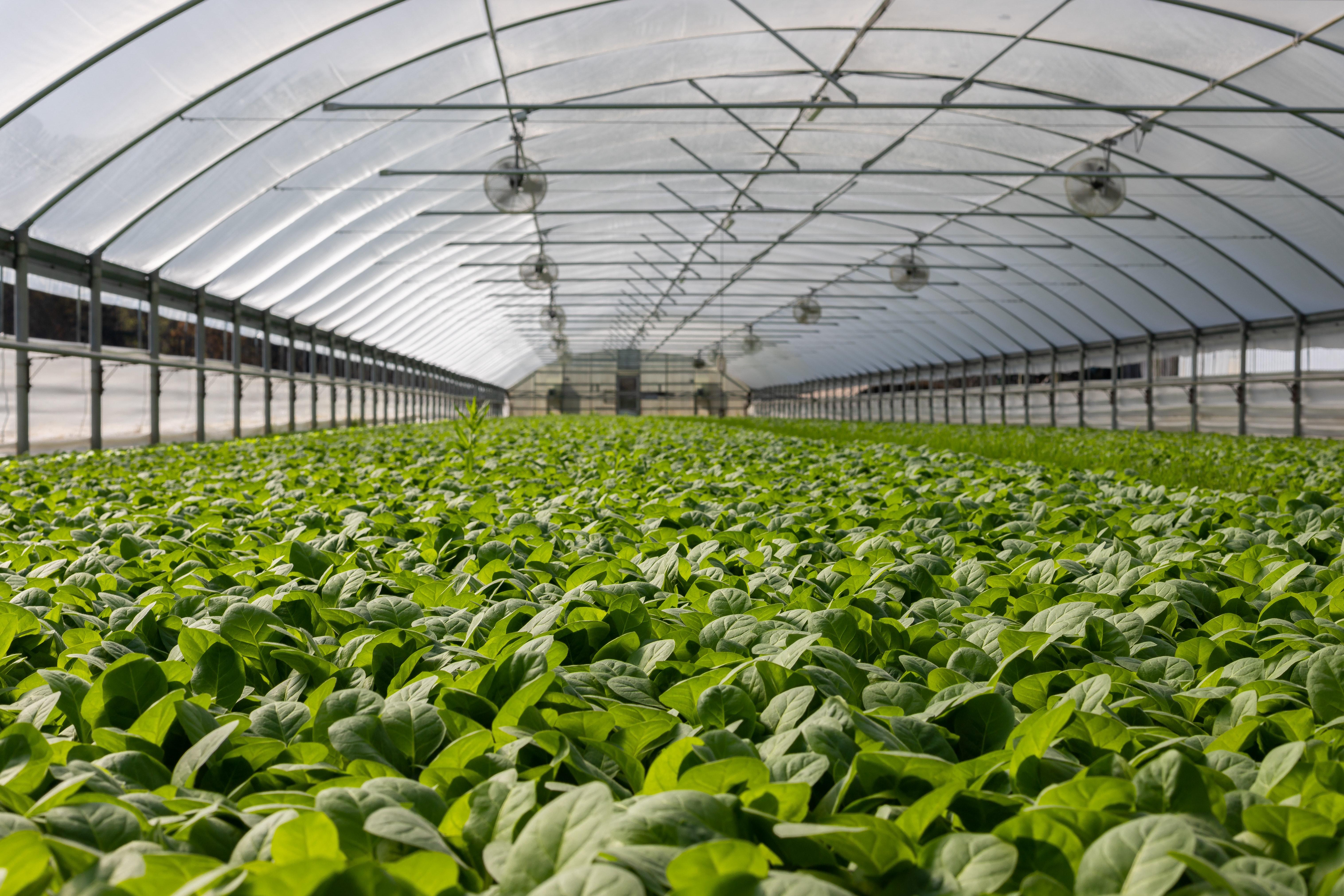 5-ti IPARD javni poziv Mera 1 za izgradnju i opremu u poljoprivrednoj proizvodnji
