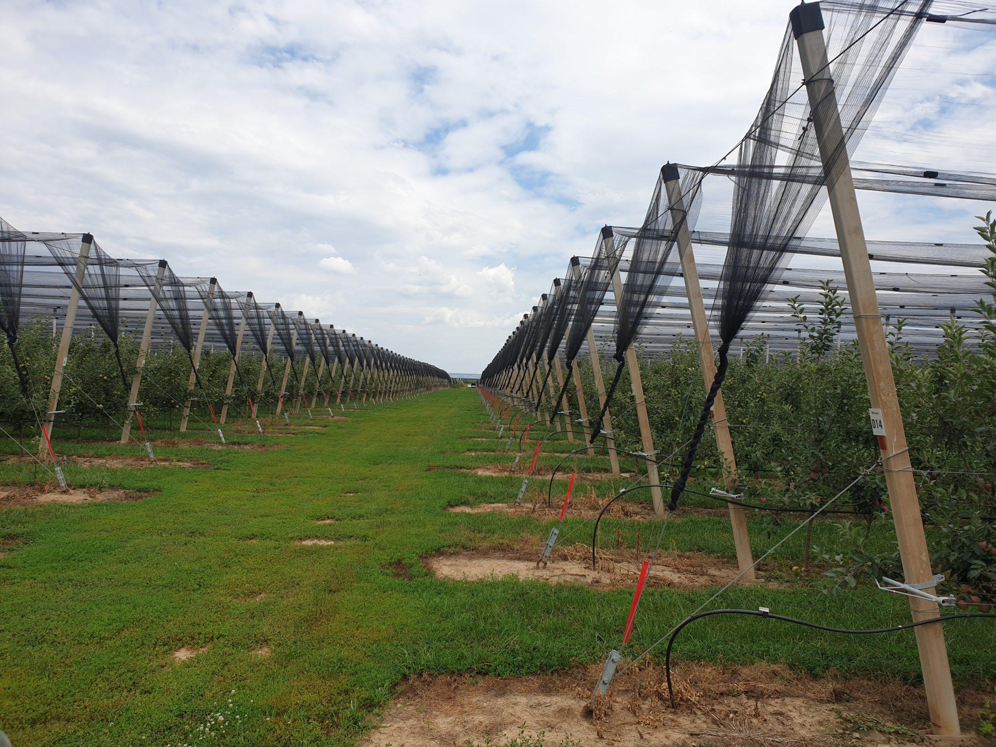 APV: Bespovratna sredstva za protivgradne mreže, ogradu za zasad i sisteme protiv smrzavanja u 2020. godini