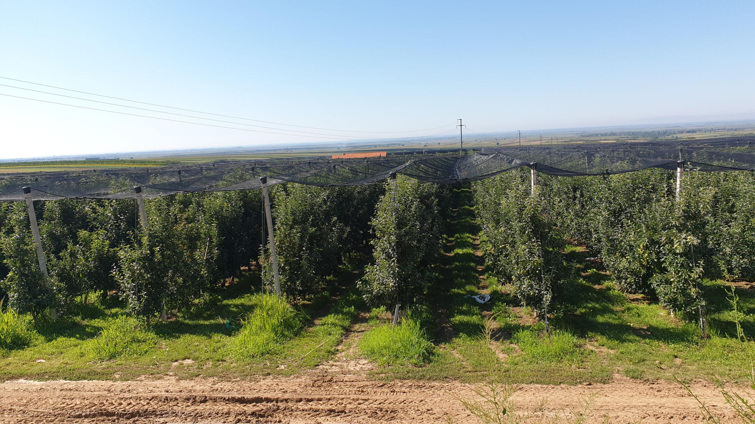 APV: Konkurs za protivgradnu zaštitu, ograde zasada i antifrost u 2021 godini