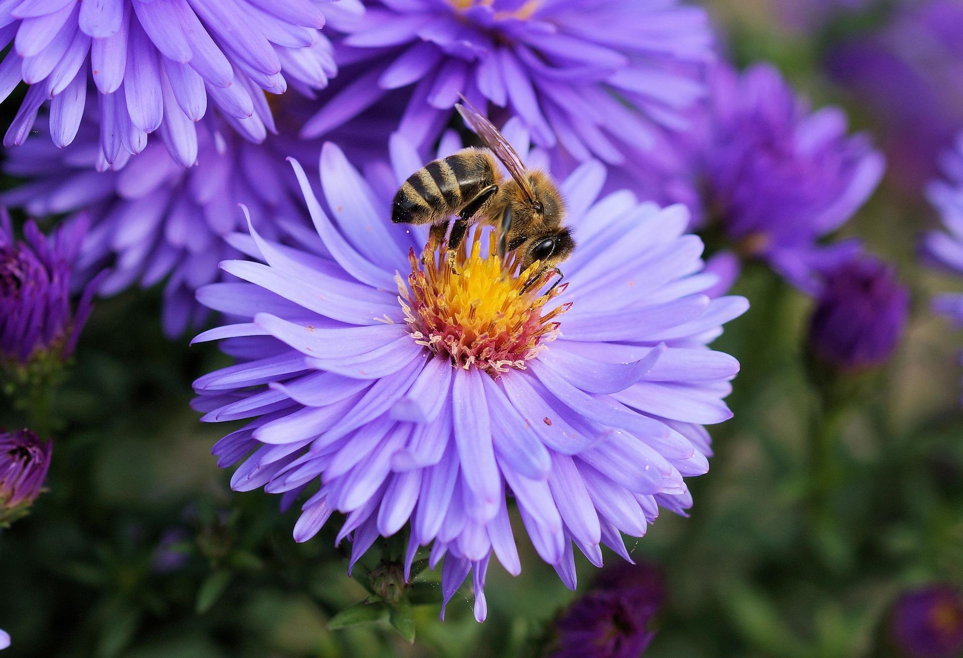 Podnošenje zahteva za subvencije po košnici pčela počinje 15. aprila